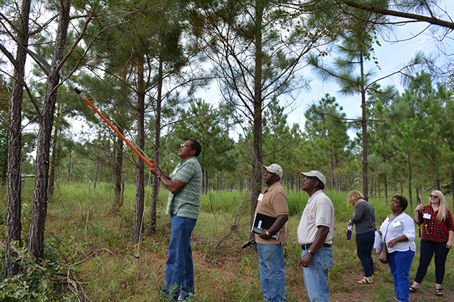 Picture 4 Landowners are learning to prune pine trees durring the hands on training session