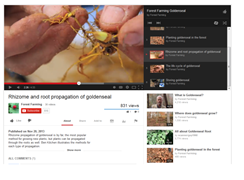 "Screen shot of the video ""Rhizome and root propagation of goldenseal"" – one of the Forest Farming video series"