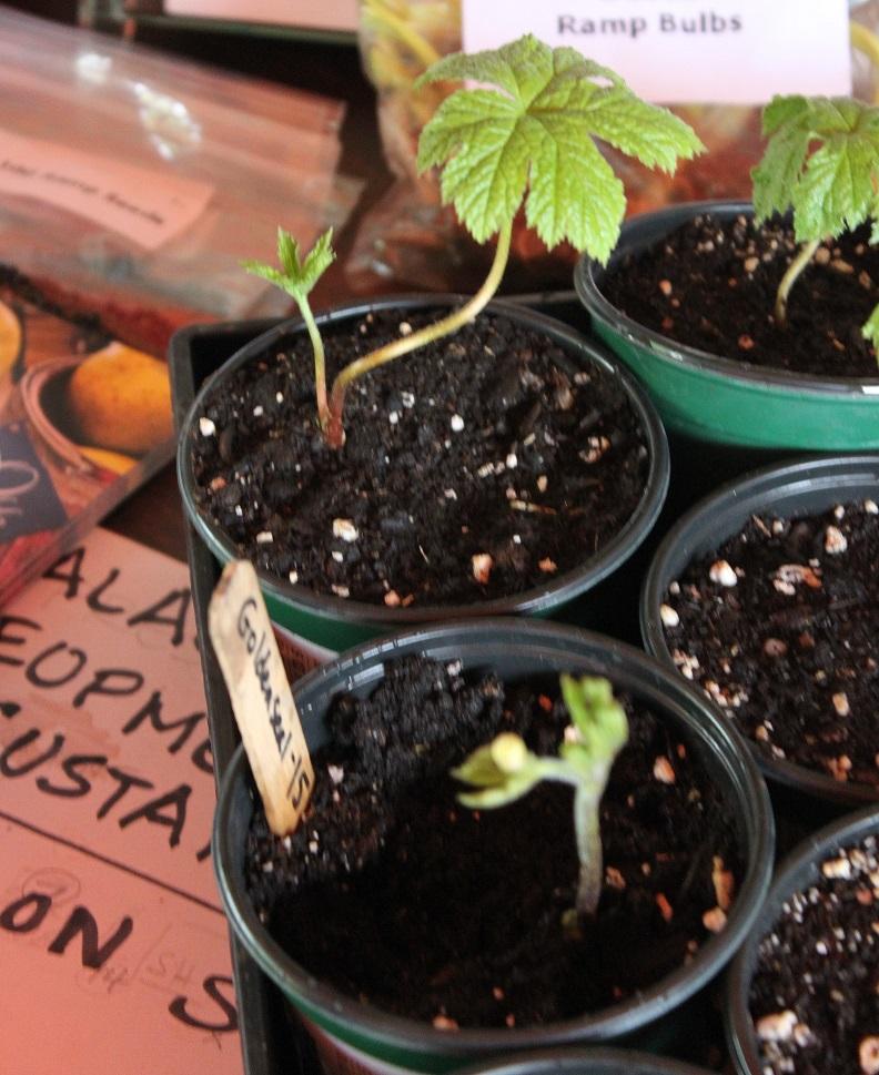 Developing an Appalachian Herb Hub
